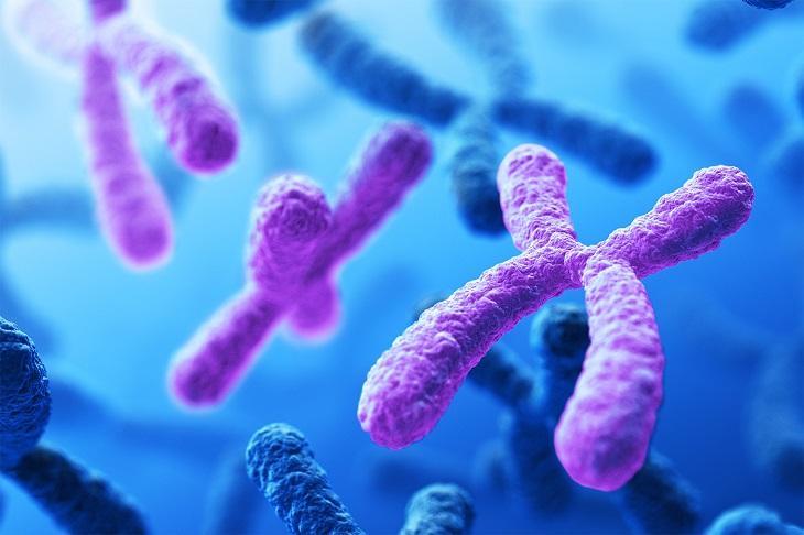 telomerasa estudios