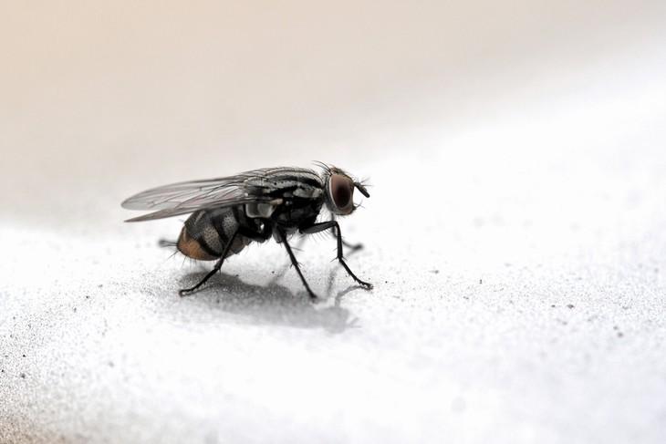 remedio para combatir moscas