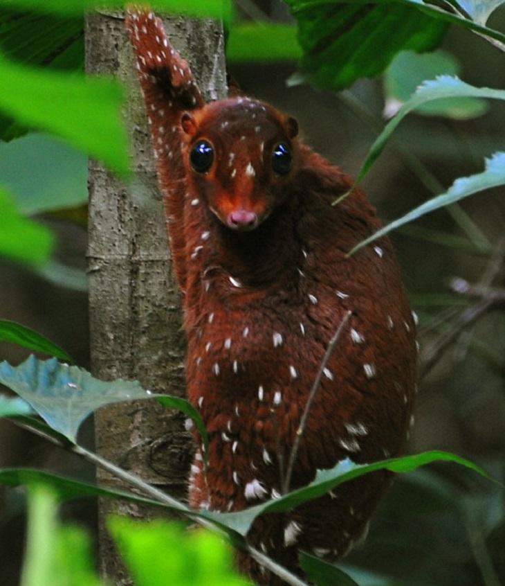 14 especies de animales desconocidas
