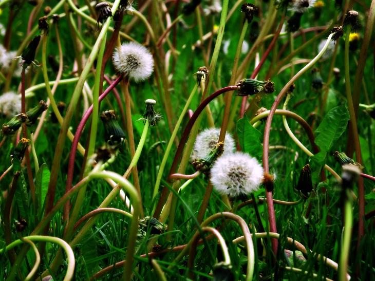 herbicida,spray, malas hierbas, jardín