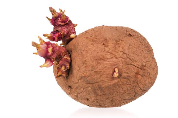 Evitar Brotes Patatas Ajos  Cebollas
