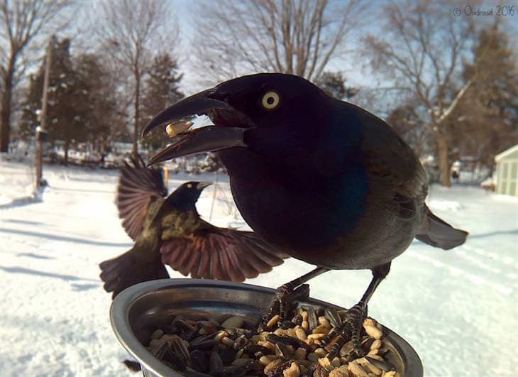 mujer captura hermosas pájaros