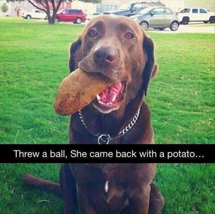 15 perros muy tontos