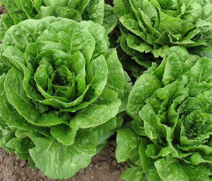 verduras más importantes organismo