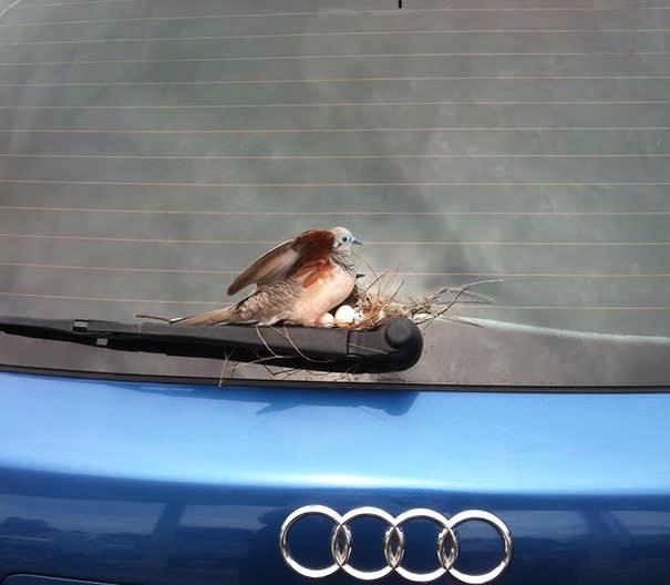 aves pájaros anidan cualquier parte