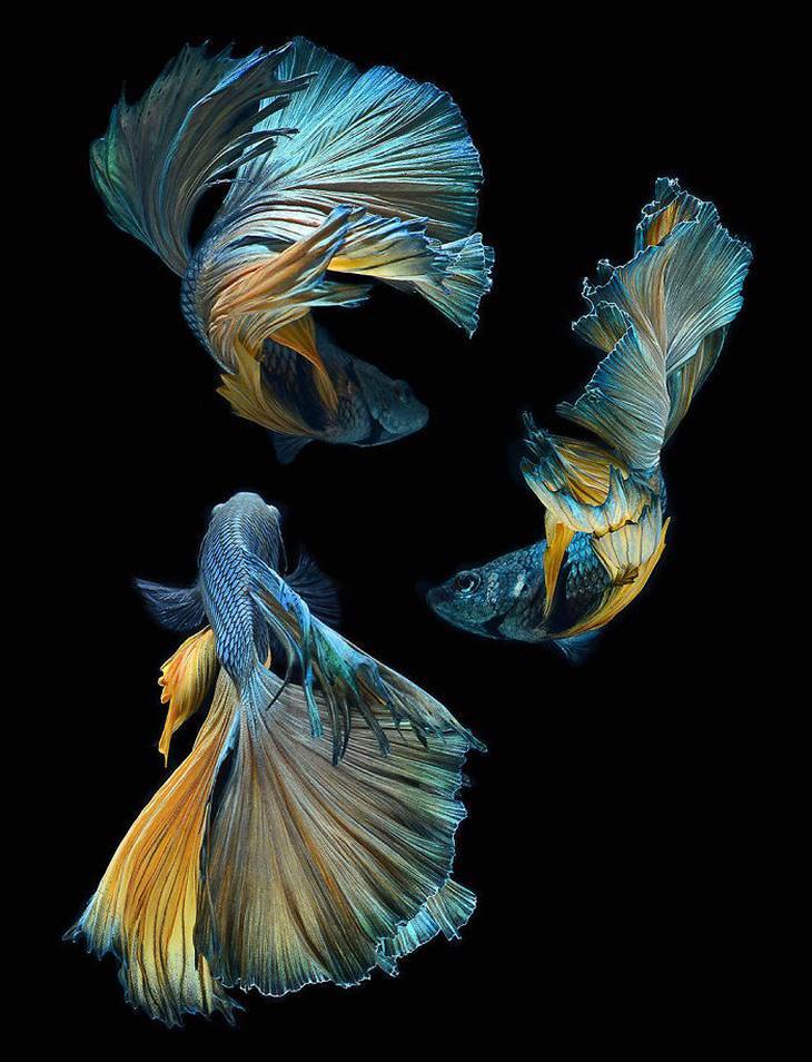 fotos peces