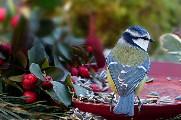 Rumi Poema Amor Momento Felicidad