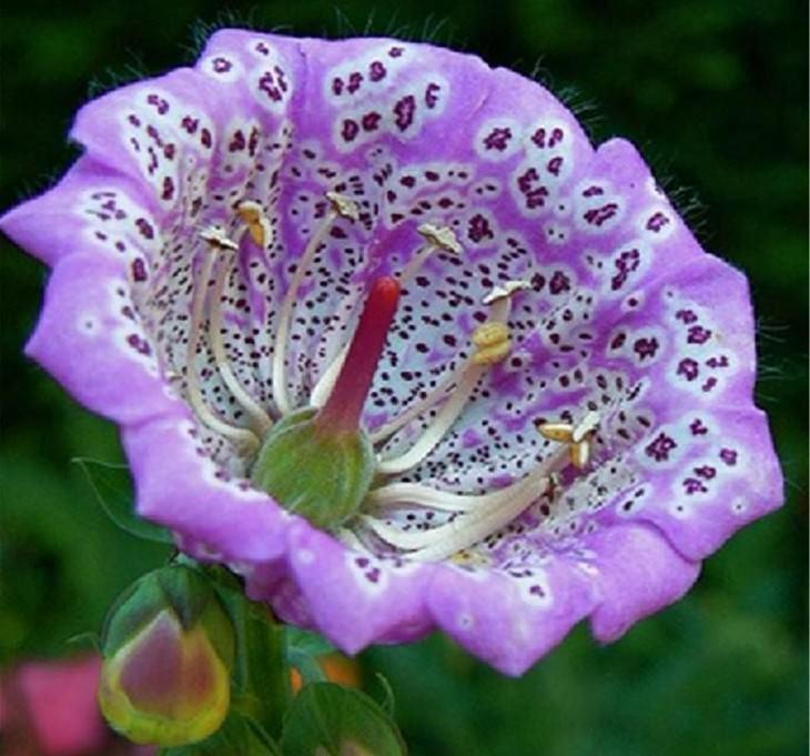 30 increíbles flores