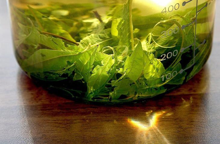 tés de hierbas