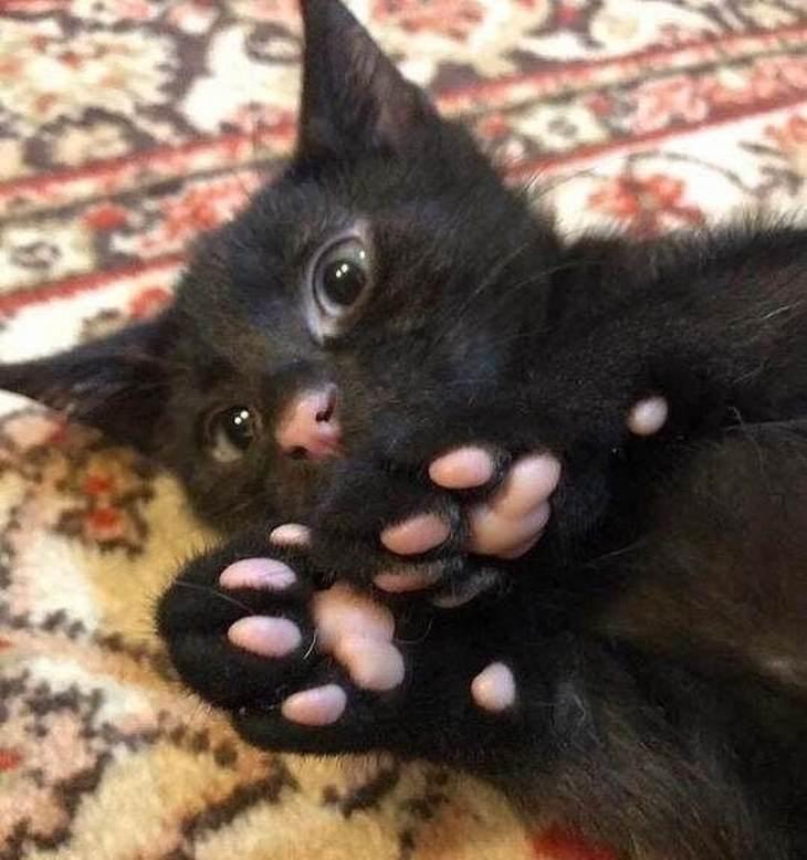 15 fotos mascotas levantar ánimo