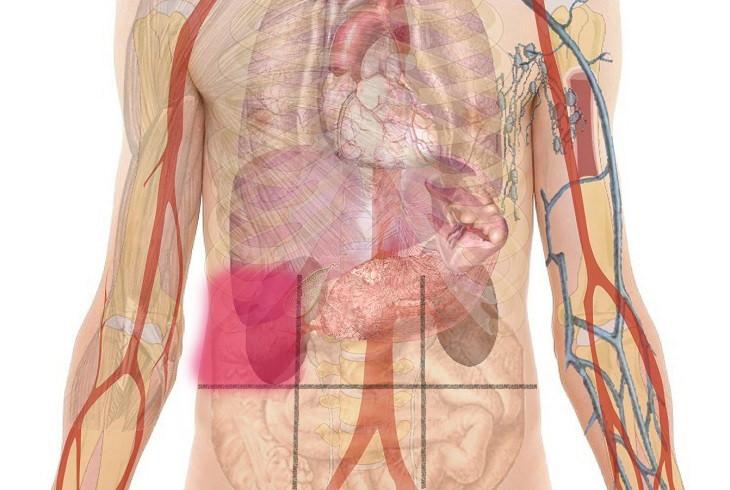 mapa abdominal del dolor