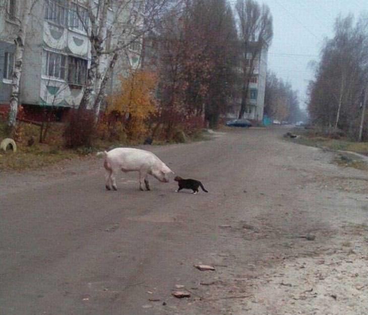 23 fotos Rusia