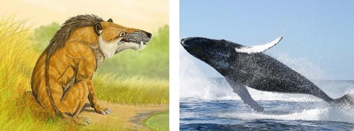 15 Animales Han Cambiado Drásticamente Con El Tiempo