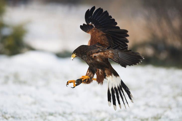 Tecnología De Vuelo Del Águila