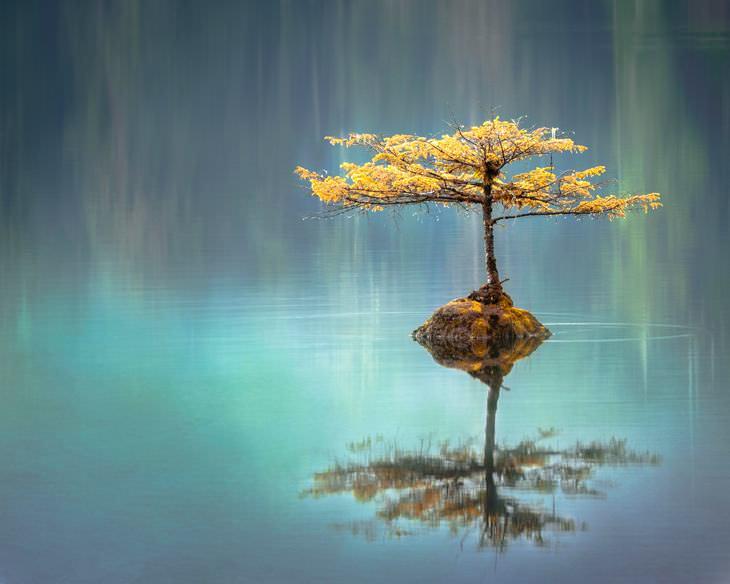 Frases Zen Pensamientos