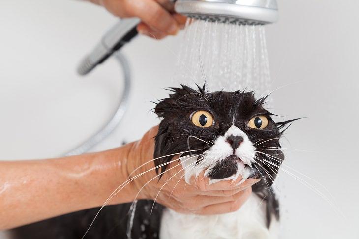 Por qué a los gatos no les gusta bañarse