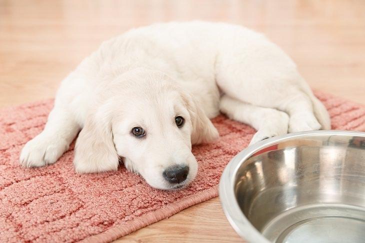 ¿Por qué los perros caminan en círculos antes de acostarse?