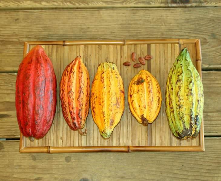 increíbles colores en los que vienen las vainas de cacao