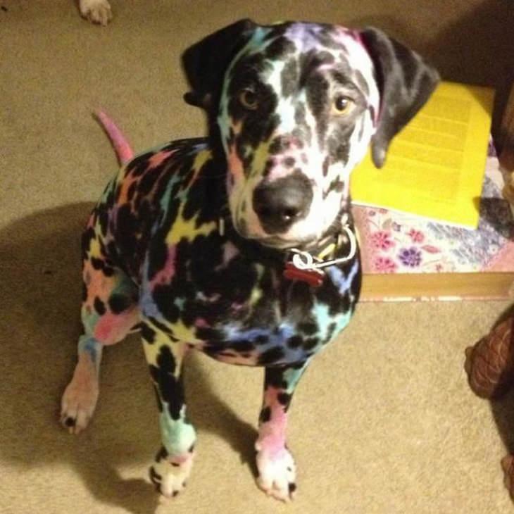 Perro dálmata pintado de colores