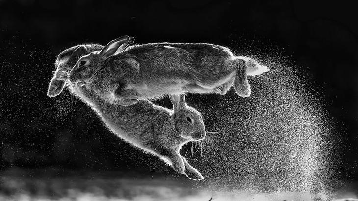 Fotografía Del Año Naturaleza Csaba Daroczi