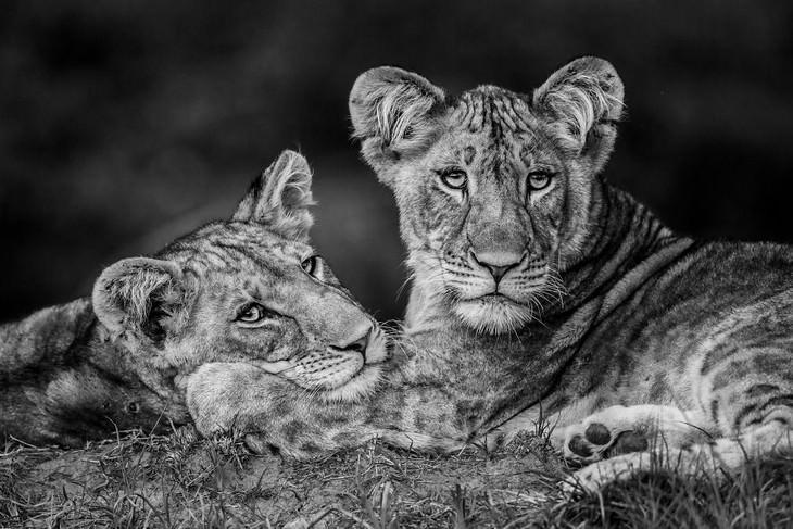Fotografía Del Año Naturaleza Luke Massey