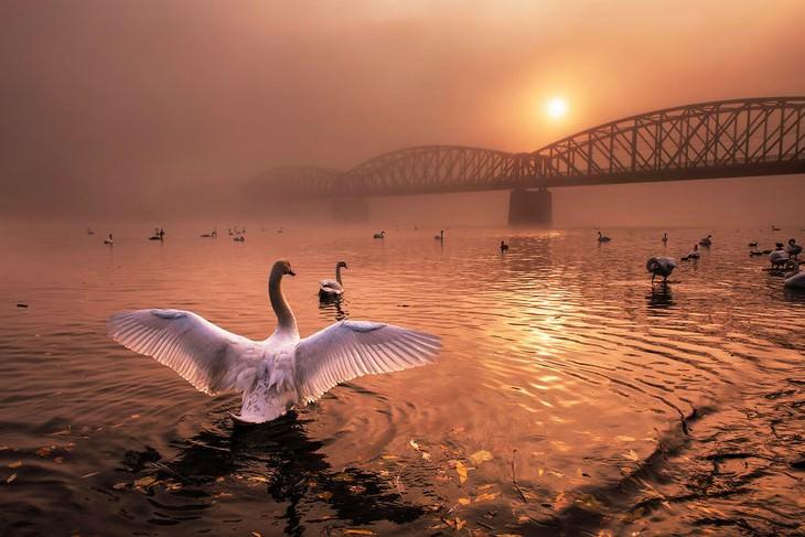 Fotografía Del Año Naturaleza Peter Cech