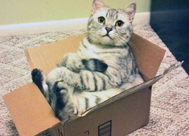 Gato en una caja de cartón