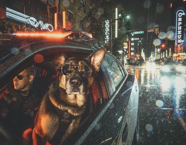Perro policía en patrulla