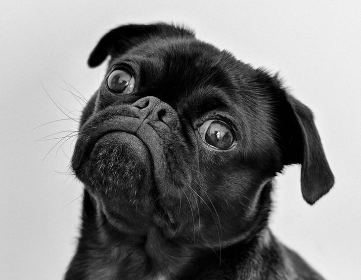 perrito negro tips control pensamiento