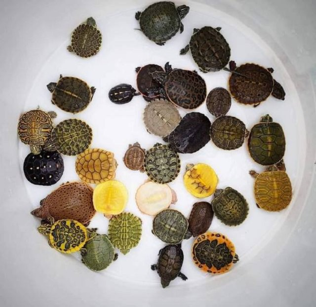diferentes de tortugas pequeñas
