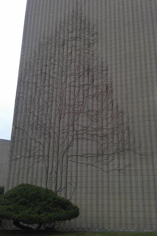 Enredaderas de hiedra en edificio