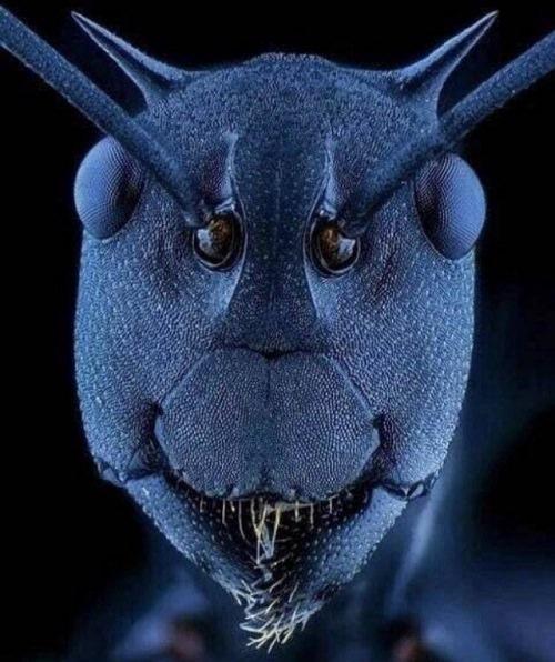 Cara de hormiga bajo microscopio