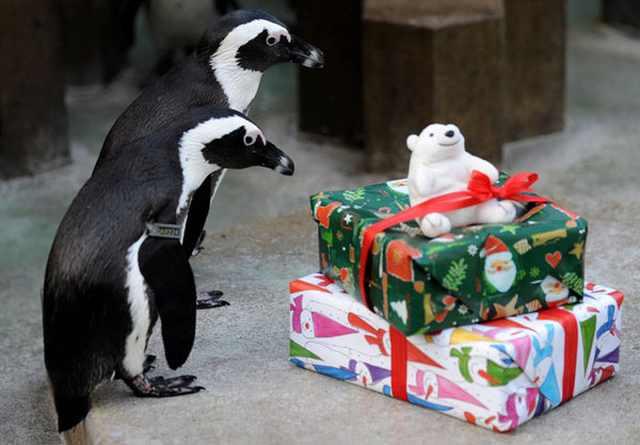 Navidad En El Zoológico De Londres Pingüinos