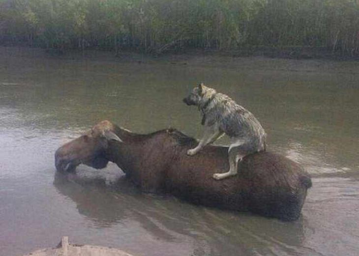 animales situaciones divertidas perro sobre un arce