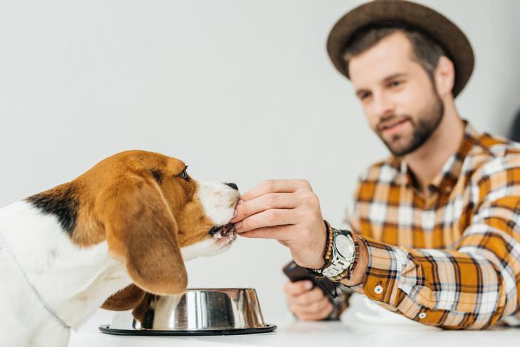 8 objetos peligrosos si tienes hijos Comida para mascotas