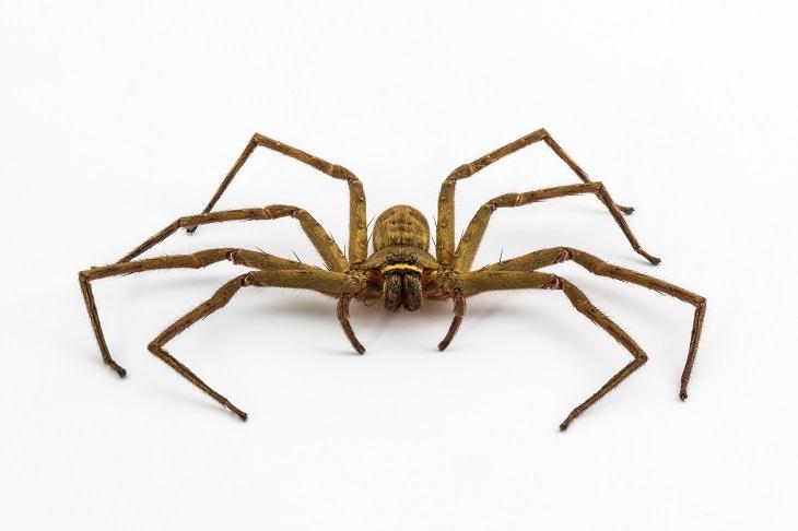 Señales de que su casa está infestada arañas