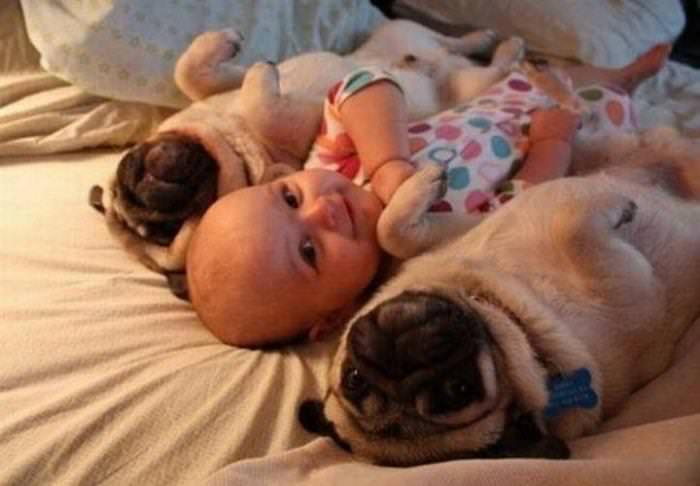 Imágenes De Niños y Sus Mascotas Bebé y pugs