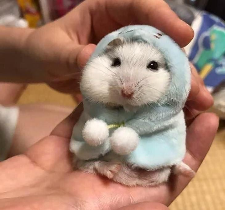Mascotas En Invierno Hamster con abrgo