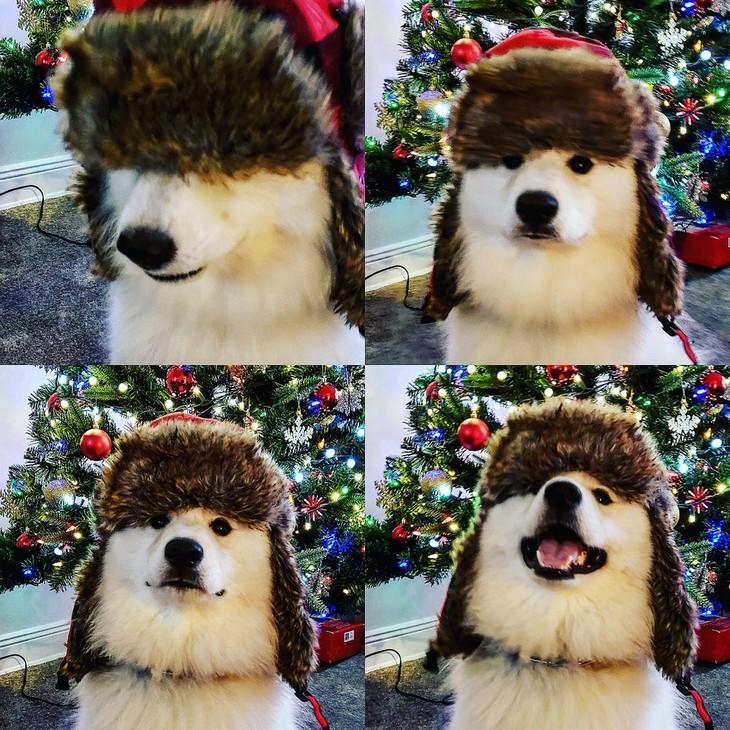 Mascotas En Invierno perrito con gorro de invierno