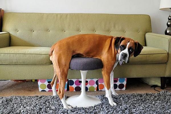 Perros en los muebles perro sobre silla