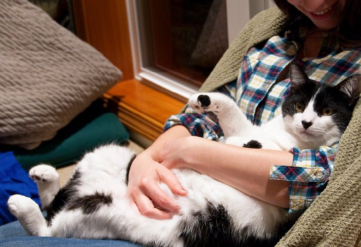 relacion gatos y hombre