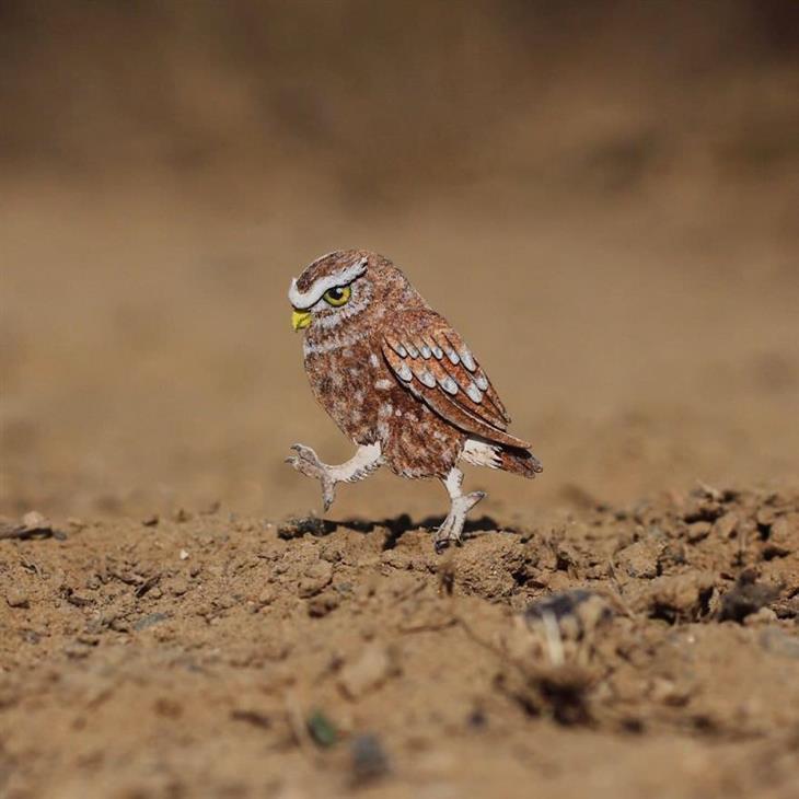 Imágenes Aves De Papel Búho de madriguera