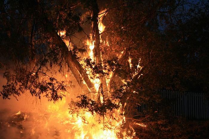 Datos Sobre Los Árboles Pueden sobrevivir incendios forestales