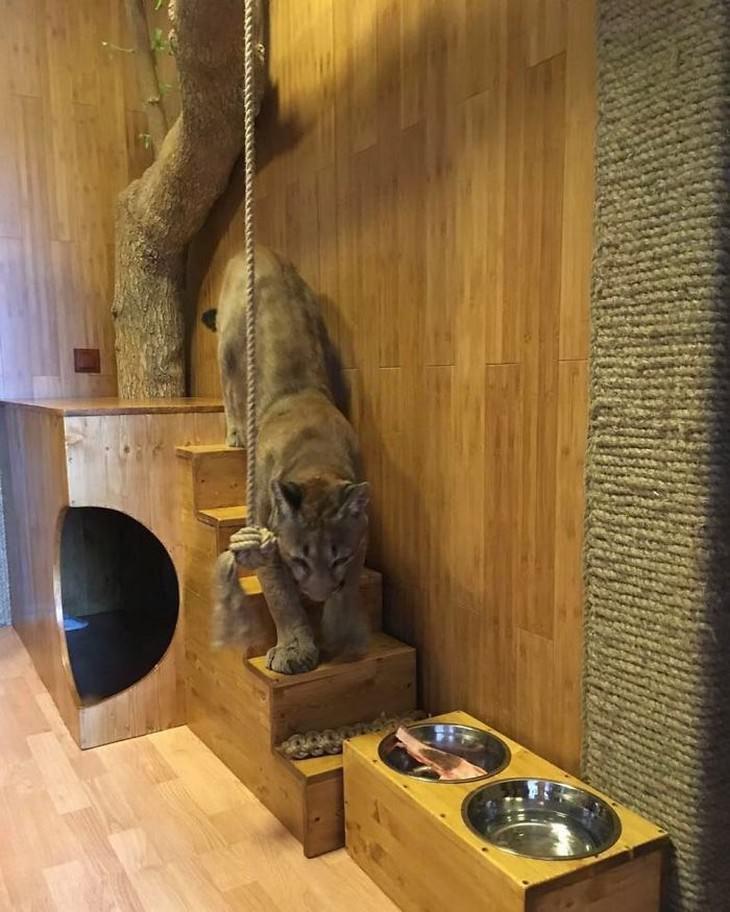 Historia Rescate Puma