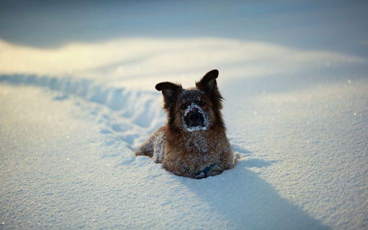 16 animales en Invierno