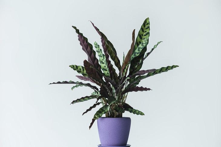 Estas Plantas Pueden Matarte