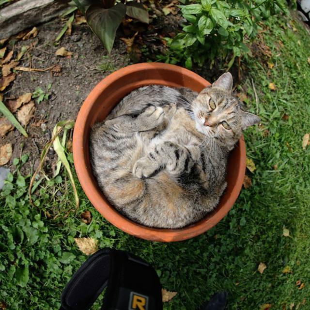 gatos plantas divertido