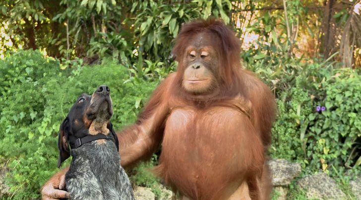 animales gran corazón
