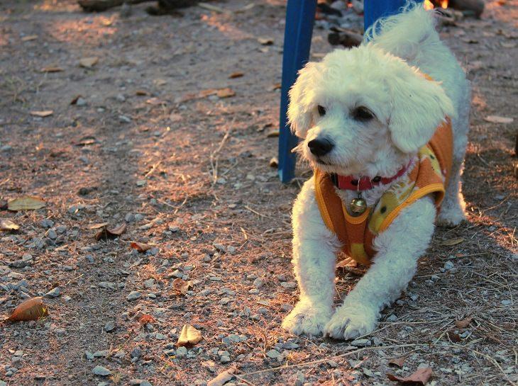 Estos Perros Son Los Compañeros Perfectos Para Los Mayores