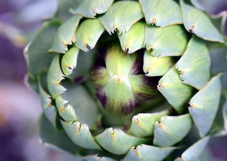 beneficios alcachofas